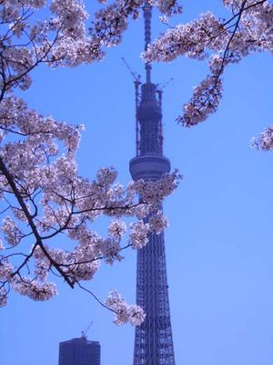 Skytreesakura1