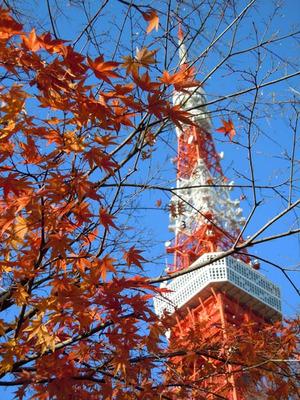 Tokyotowerkouyou